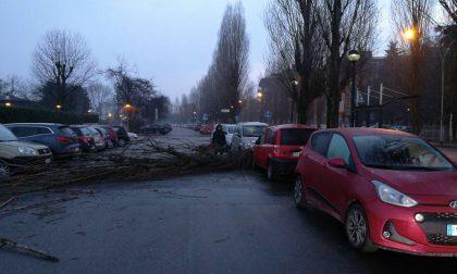 Assago, Albero piomba al suolo: macchina distrutta