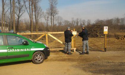 Distruggono un bosco per rubare la legna pregiata: fermati dalla Forestale
