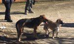 Lite finita a coltellate in casa a Corsico, salvi gli animali rimasti chiusi nell'appartamento