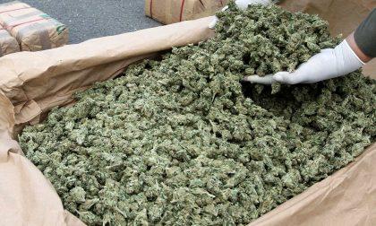Spaccio a Milano dall'Albania: sequestrati 440 chili di marijuana e 10 di cocaina
