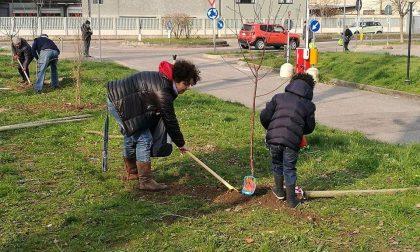 È nato il Bosco dei 100 alberi a Buccinasco