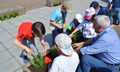 Tornano i fiori a Robarello grazie agli alunni di Buccinasco  (FOTO)