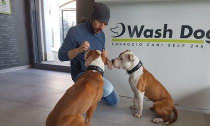 Wash Dog: un mondo di coccole per i vostri amici a 4 zampe