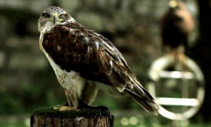 Una giornata fuoriporta: Castello di Vezio e l'arte della falconeria