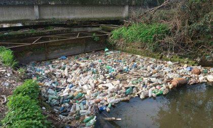 Trenta sacchi di plastica nel cavo Borromeo a Basiglio: le sentinelle del verde ripuliscono
