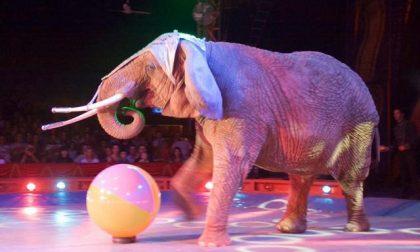 Elefante scappa dal circo e danneggia un tir