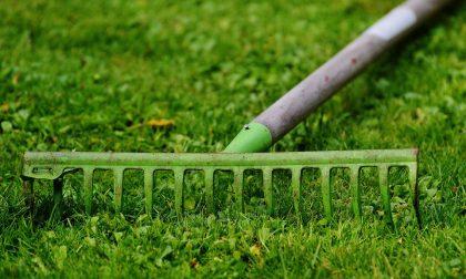 Piante in giardino e in casa ci fanno vivere meglio