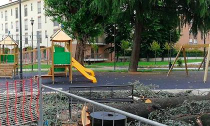 Alberi tagliati è polemica social a Cesano Boscone