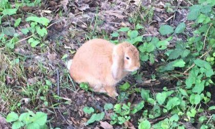 Abbandonano coniglio al parco, l'appello per metterlo in salvo