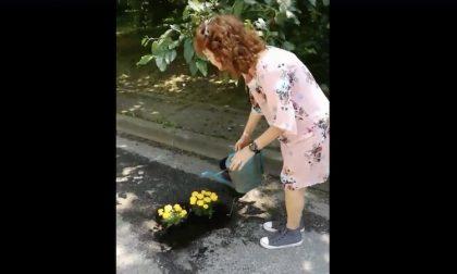 """BucciRinasco mette fiori nelle buche, ma il sindaco replica: """"Pericoloso"""""""