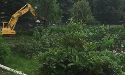 Esiste un motivo per abbattere in un giorno un filare di 25 alberi ad alto fusto?