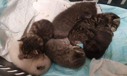 Sei gattini abbandonati in una scatola, volontari li mettono in salvo