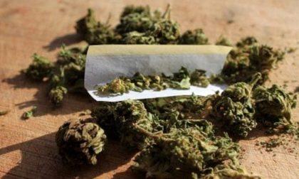 Un altro arresto dei carabinieri di Corsico, in casa hashish e marijuana
