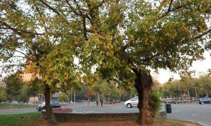 Progetto per una nuova piazza Foglia, ma il Comitato Occhi Aperti dice di no
