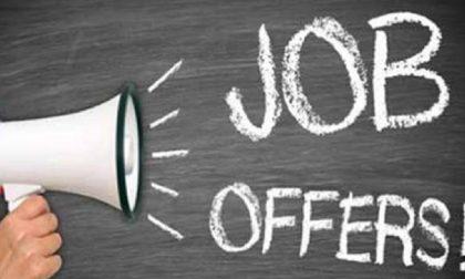 Offerta di lavoro: Trezzano cerca rilevatori per il Censimento