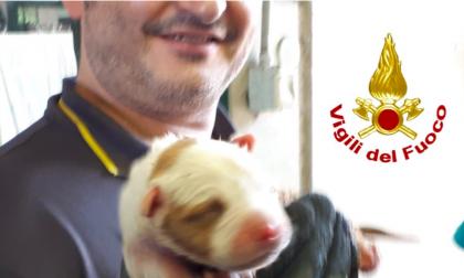 Cane intrappolato sotto una grata: lo salvano i vigili del fuoco - FOTO