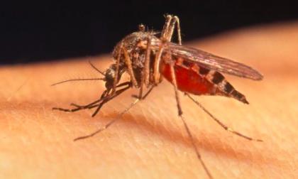 West Nile virus 2018: due casi nel Milanese, quinta vittima in Veneto