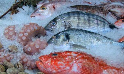 Come scegliere il pesce? Ecco alcuni consigli utili