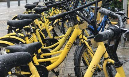 Via le bici Ofo da Trezzano, vince l'inciviltà