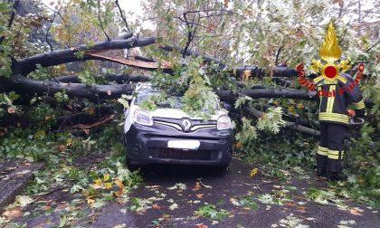 Maltempo, un albero crolla su una macchina: un 25enne ferito FOTO