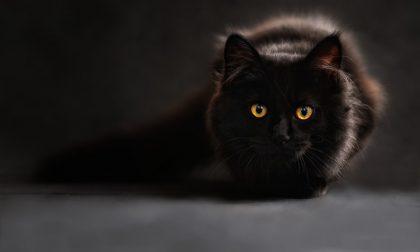 Perché sterilizzare i gatti fa bene? I benefici per la salute