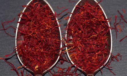 I benefici dello zafferano, ecco perché fa bene alla salute