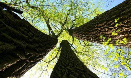 Un nuovo albero aTrezzano per ogni bimbo nato o adottato quest'anno.