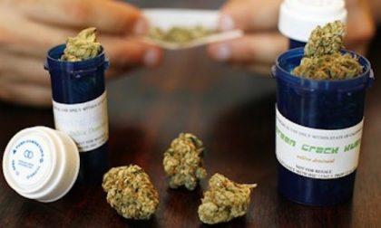 Cannabis terapeutica, via libera dal Pirellone alla coltivazione