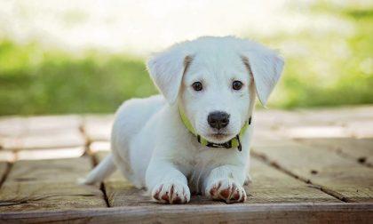 Alimentazione cani, consigli per la corretta nutrizione