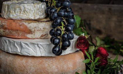 Il formaggio fa bene alla salute (senza esagerare)