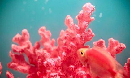 Colore Pantone 2019, ora tocca al Living Coral