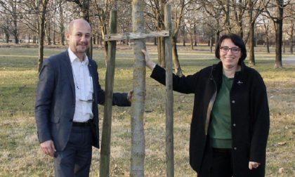 A Rozzano 250 nuovi alberi grazie al patto con l'Agenzia forestale della Regione