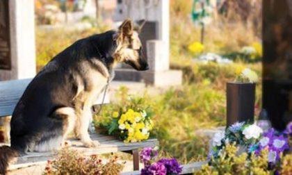 Cani e padroni seppelliti insieme, Regione approva la legge