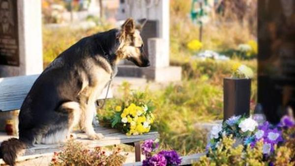 Cani e padroni seppelliti