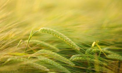 Fibre e cereali, i benefici per la salute