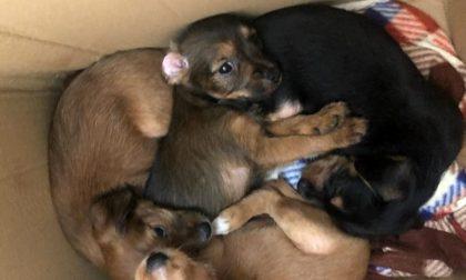 Sette cuccioli abbandonati insieme alla mamma in un fossato