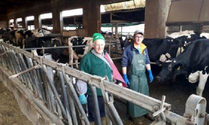 Raid in allevamento nel Bresciano: ignoti giustiziano sei vacche e sversano tutto il latte