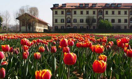 "Torna ""Tulipani Italiani"" ma cambia location"