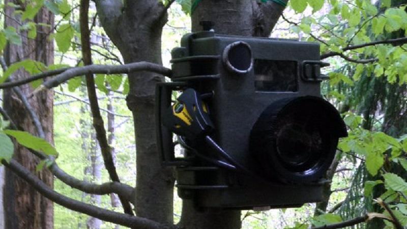 Fototrappole per incastrare incivili