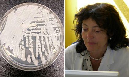 Candida auris: l'ultimo spauracchio del fungo che uccide in tre mesi