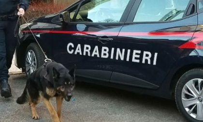 Droga nascosta in cantina: la scopre il cane dell'Unità Cinofili