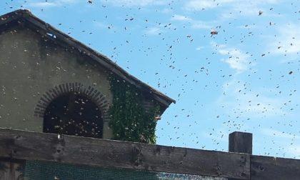 Centinaia di api volano sul Borgo: messe in salvo dagli apicoltori