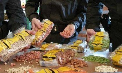 Sequestrate 20 tonnellate di lenticchie spacciate per italiane