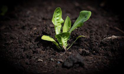 Come realizzare una serra per il proprio orto
