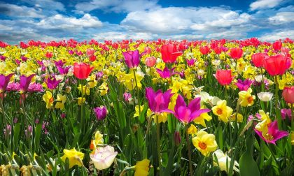 Pasqua a tavola, il ruolo dei fiori