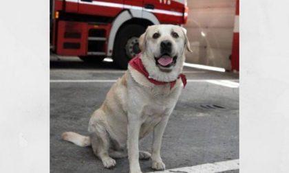 """Addio Ruben, il cane pompiere di Milano: """"Grazie di tutto amico fedele"""""""