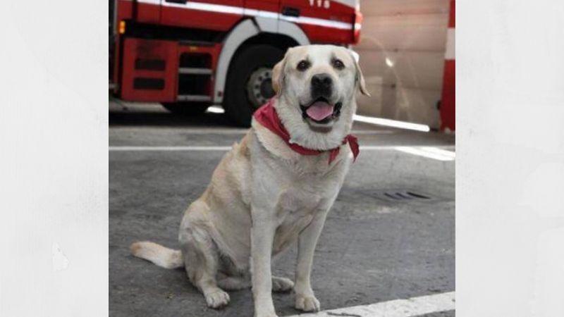 Ruben cane pompiere