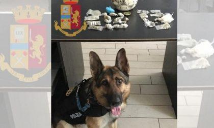 Trovato fortino di droga dai cani poliziotti