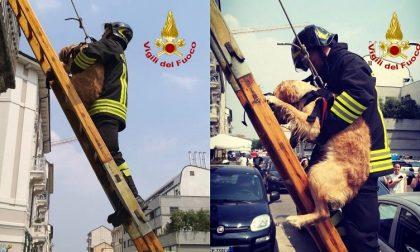 Cane lasciato sul balcone sotto il sole: salvato dai pompieri