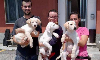 Cani abbandonati davanti al cancello: salvati, sono in cerca di una famiglia FOTO